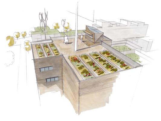 Roof Gardening 1